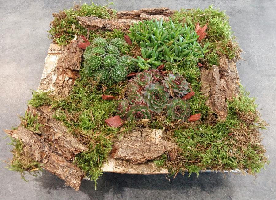 Livraison fleurs fontainebleau plantes vertes samoreau for Plantes fleurs et jardins